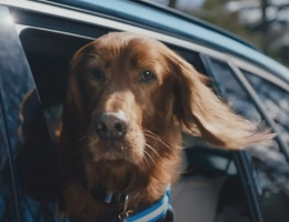 BMW dDrive - The Thrill of the drive for canines